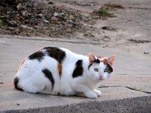 Cat, Fauna, Small To Medium Sized Cats, Cat Like Mammal stock images