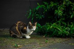 Cat, Fauna, Small To Medium Sized Cats, Whiskers stock image