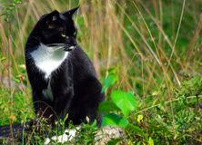 Cat, Fauna, Whiskers, Grass Royalty Free Stock Photo