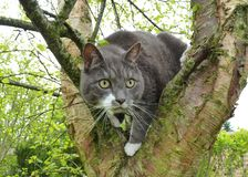 Cat, Fauna, Whiskers, Tree stock photography