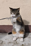Cat with a feather Stock Images