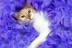 Cat in feathers. The domestic pet a cat in lilac feathers Stock Photos