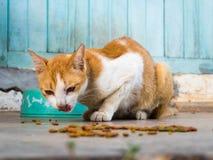 Cat feed stock photos