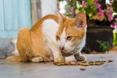 Cat feed Stock Images