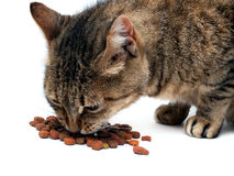 Cat feeding Stock Photos
