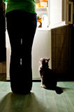 Cat feeding time. Hungry cat waiting for a meal and lick one's lips. refrigerator emit bright light. Dog feeding time Stock Photo