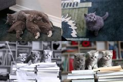Cat feeds kittens, kittens and books, screen split in four parts Royalty Free Stock Images