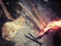 Cat feel cold. My beloved cat warm that body near the fire ..but now my cat  died Stock Photos