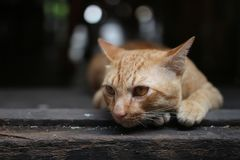 Cat feeling lonely Royalty Free Stock Photo