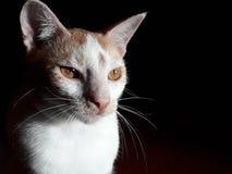 Cat Feeling But Sad Mood foto de archivo
