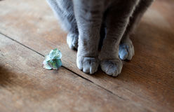 Cat Feet Royalty Free Stock Images