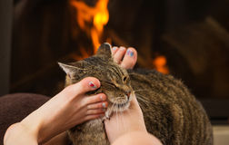 Cat and feet in front of the fireplace Stock Image
