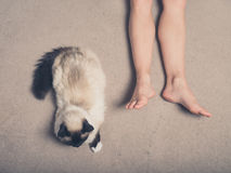 Cat and feet of young woman on carpet. A Birman cat and the feet of a young woman on a carpet Stock Photography