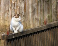 Cat on a fence. Cat sitting on a wooden fence Royalty Free Stock Images