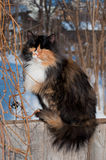 Cat on the fence. Black with white and red cat sitting on the fence and stares at the camera Stock Photography