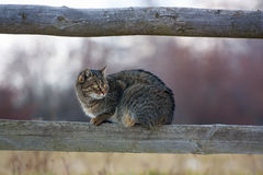 Cat on fence Stock Image