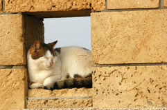 Cat in fence. Sleeping cat in a fence Royalty Free Stock Photos