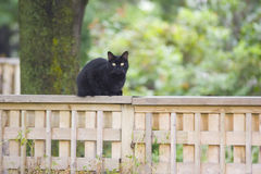Cat on a fence. Black cat sitting on a fence Royalty Free Stock Images