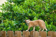 Cat walking on fence Royalty Free Stock Photo
