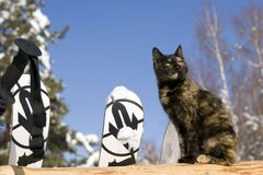 Cat on the fence and mountain ski. Variegated Cat on the fence and mountain ski in winter outdoors over blue sky Royalty Free Stock Photos