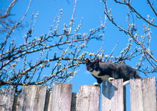 Cat on a fence. Neighbors cat is staring at photographer.  Stock Photos