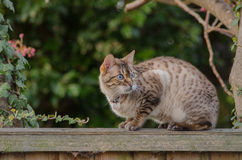 Cat on the fence Royalty Free Stock Image