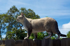 Cat on fence in profile Stock Photo