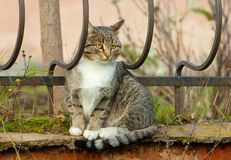 Cat on a fence Royalty Free Stock Image