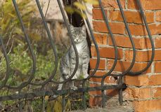 Cat on a fence Royalty Free Stock Photography