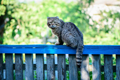 Cat on a fence. Staring at photographer Stock Photography