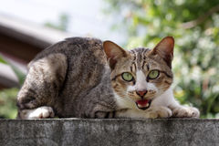 Cat  on fence. Of thailand Royalty Free Stock Photo