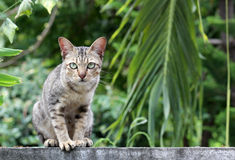 Cat on fence royalty free stock photos