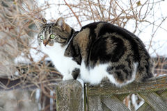 The cat on the fence Royalty Free Stock Photo