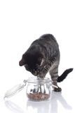 Cat fetching food out of a glass Stock Photography