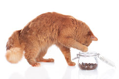 Cat fetching food out of a glass Stock Photos