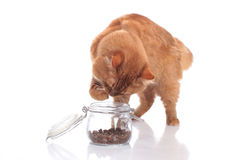 Cat fetching food out of a glass Royalty Free Stock Image