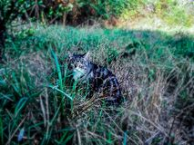 Cat hiding between the high grass in a field. stock image