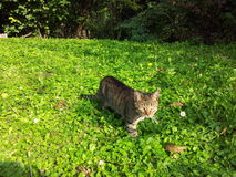 Cat in a field royalty free stock images