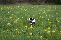 Cat in field. Lake Oeschinen stock image