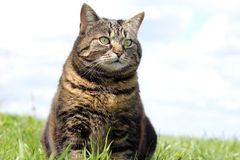 The cat Royalty Free Stock Photography