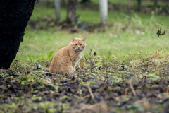 Cat in field Royalty Free Stock Photo