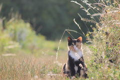 Cat in the field Royalty Free Stock Image
