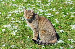 Cat on the Field Royalty Free Stock Photography