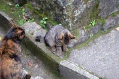 Cat fight scene or portrait stock image