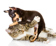 The cat fights with a dog. Royalty Free Stock Images