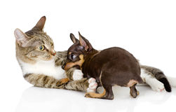 The cat fights with a dog. Isolated on white background royalty free stock image