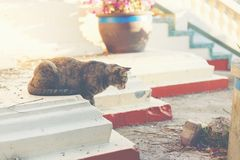 Cat finding something. Stock Photography