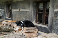 Cat on the fire-wood. Nice cat sleeping on the fire-wood Royalty Free Stock Image
