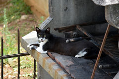 Cat on the fireplace Stock Photos