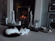 Cat by fireside Royalty Free Stock Photo